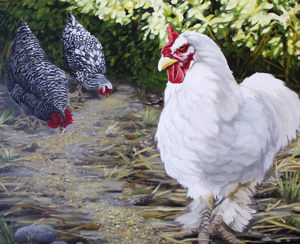 Big Comb and Her Hens Rule the Backyard Roost