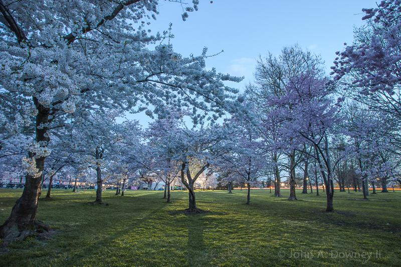 Cherry Blossoms-55.jpg