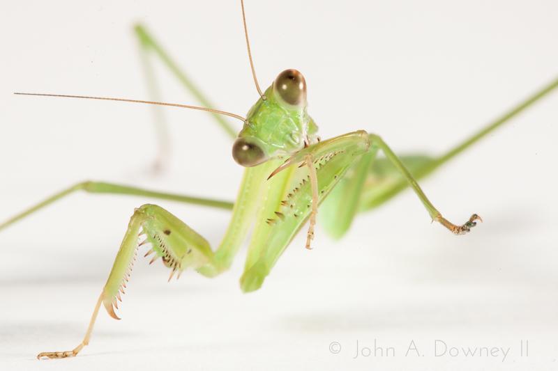 Mantis-42.jpg