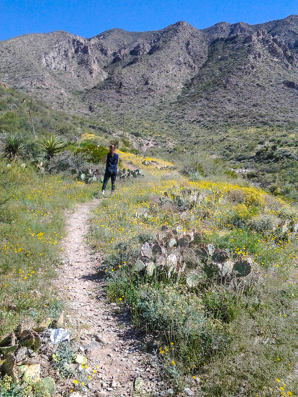 One of Franklin Mountains State Park's wonderful hiking trails in El Paso.