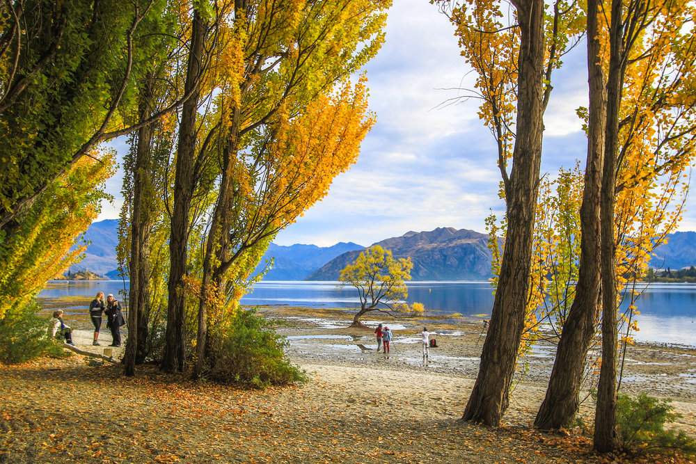 The first glimpse of That Wanaka Tree looks something like this