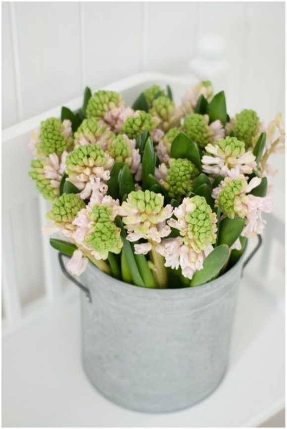 HYACINTH IN A GALVANIZED POT