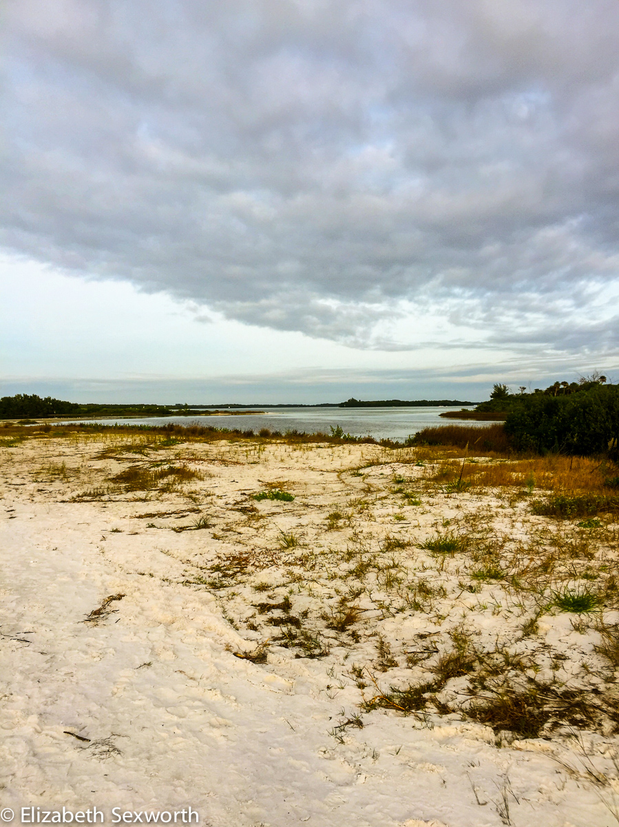 Marshy area at Fort DeSoto's North Beach
