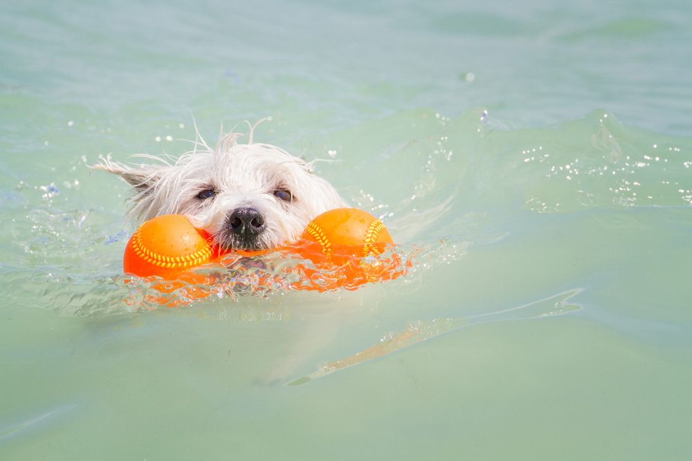 Take man's best friend for a swim at Paws Playground