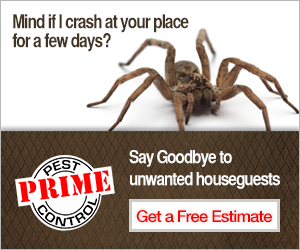 prime_pest_300x250.png