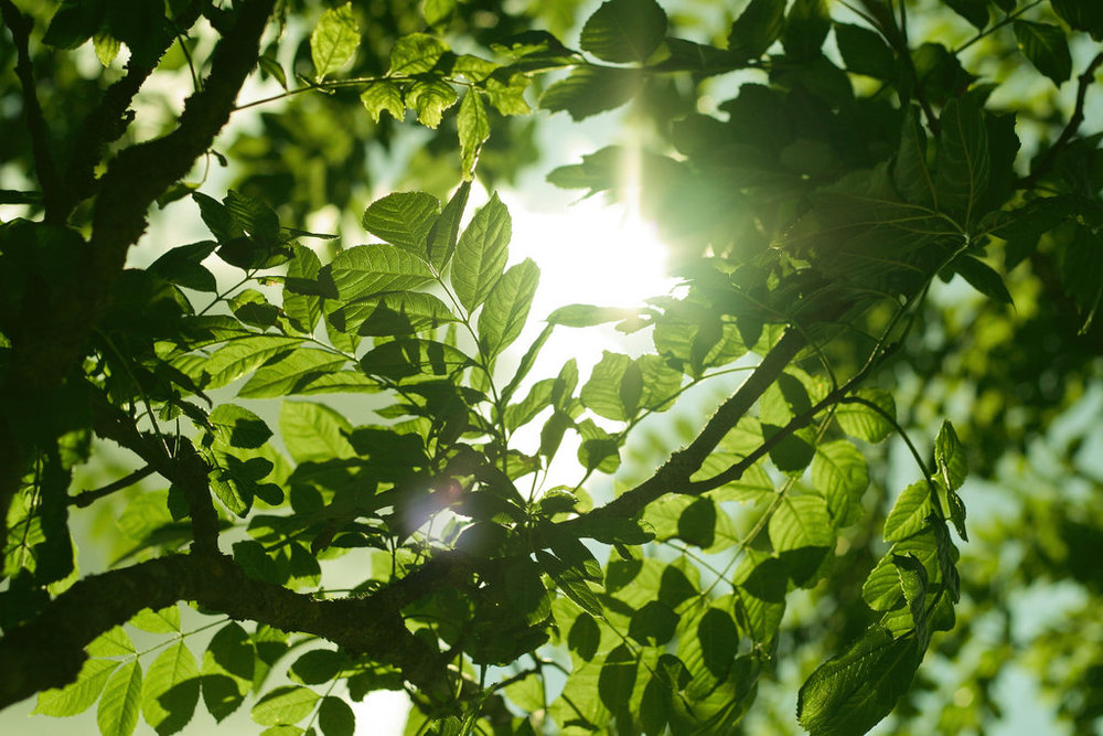 sun_shining_through_leaves_by_hoeld-d6gr627.jpg