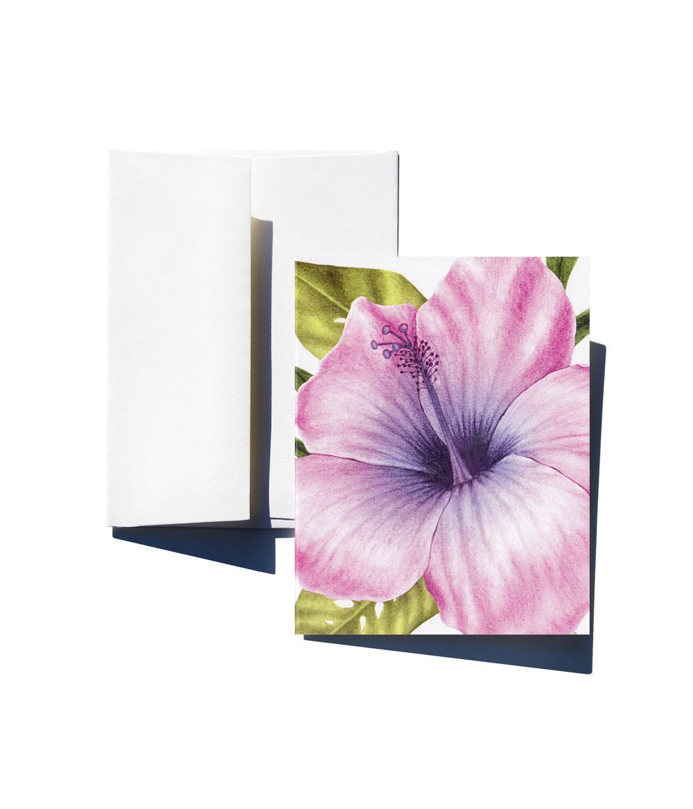 Hibiscus w env.jpg