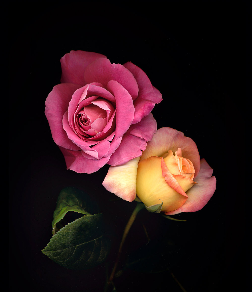 Suzanne's-roses.jpg