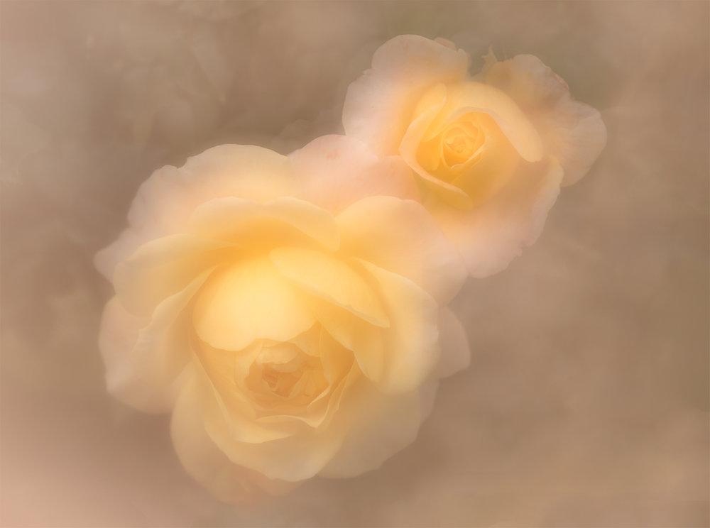 soft roses.jpg