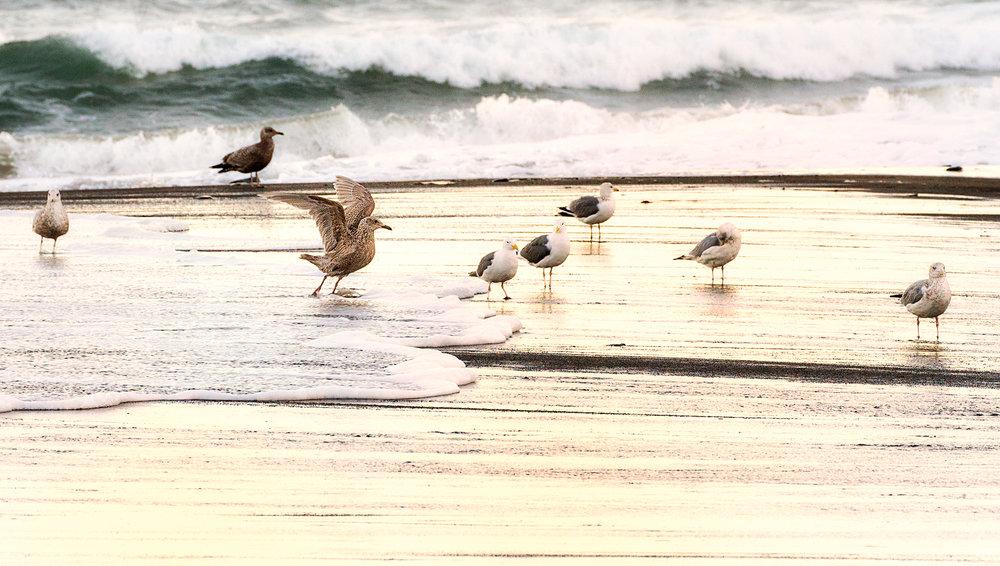 Sea Gull Arabesque.jpg
