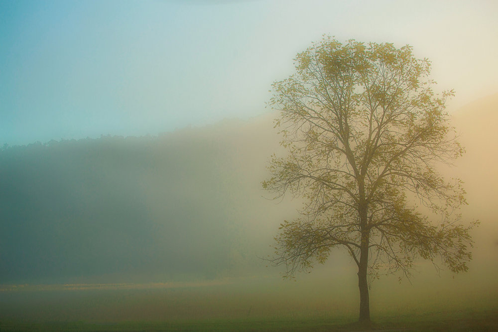 lone tree at daybreak.jpg
