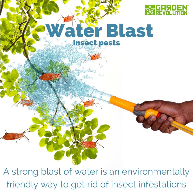 waterblast pests