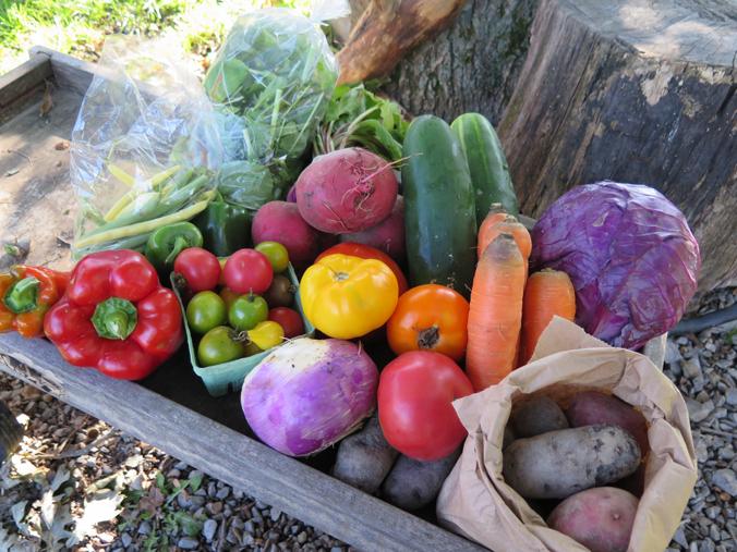 the farm 5.jpg
