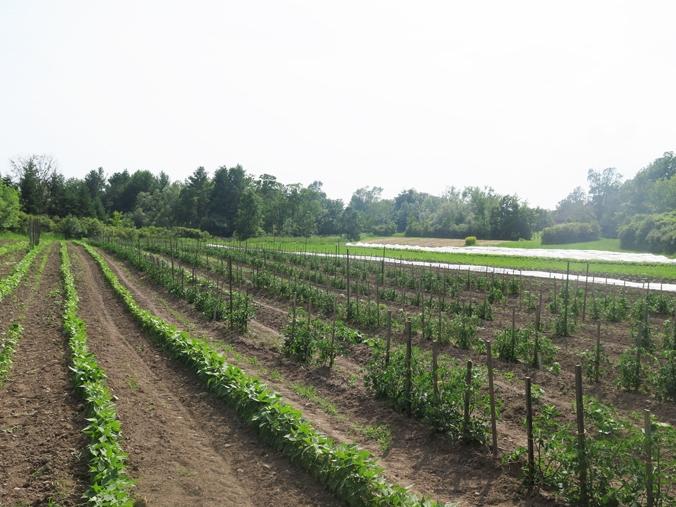 the farm 6.jpg