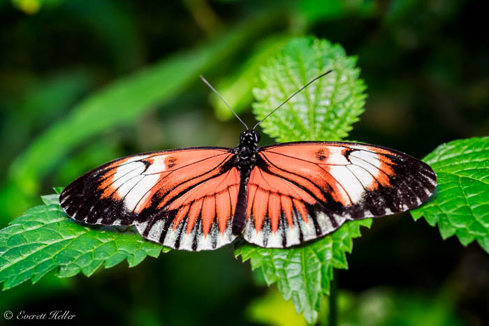 Butterfly #2