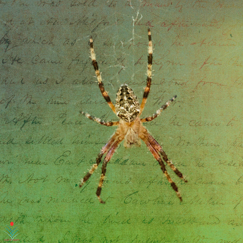 Spider on Old Manuscript.jpg