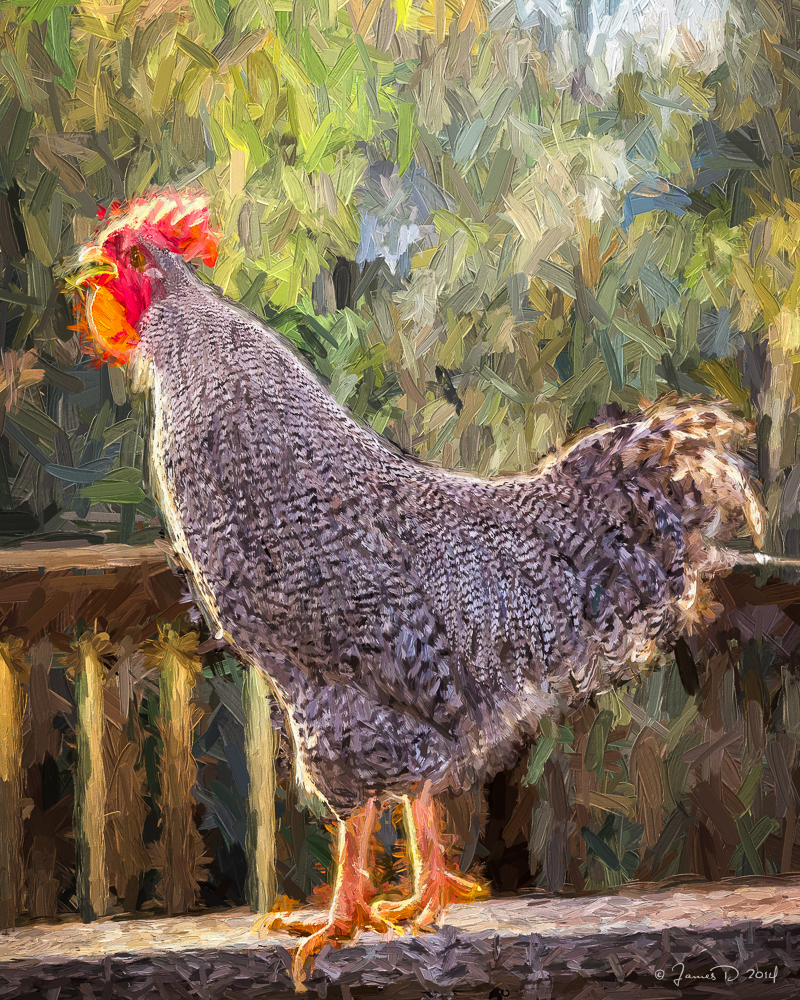 No_Spring_Chicken_(in_oil)