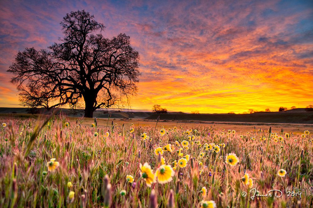 Early morning at Shell Creek Rd. in eastern San Luis Obispo, County, California.