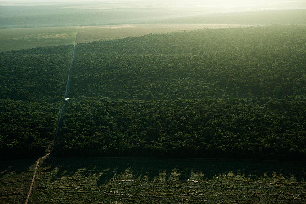 Cerrado i Mato Grosso.