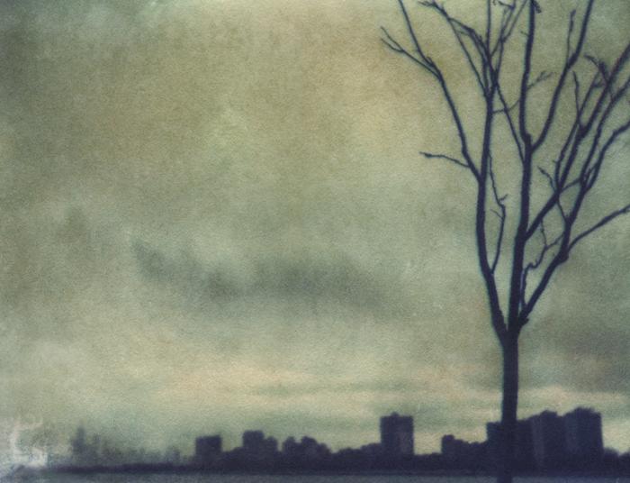 tree skyline 1.jpg