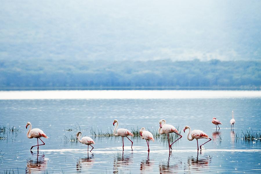 flamingos-of-nakuru_12949542483_o.jpg