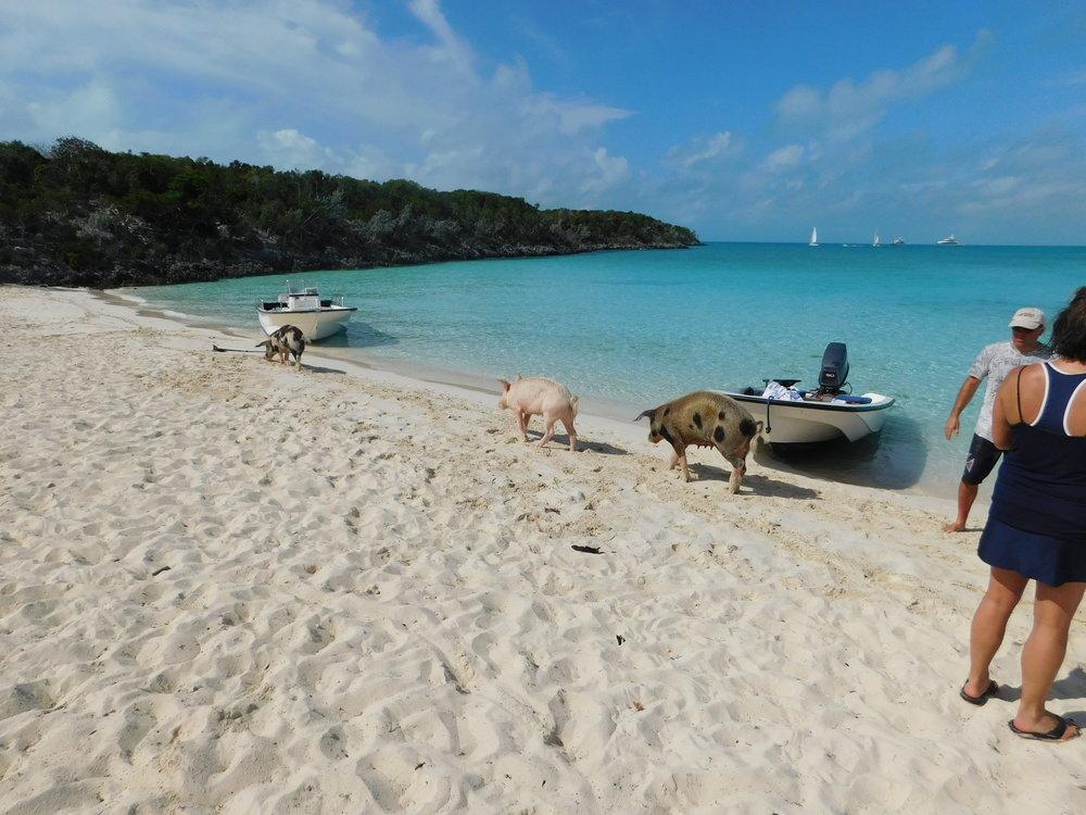 Bahamas 2016 (746).jpg