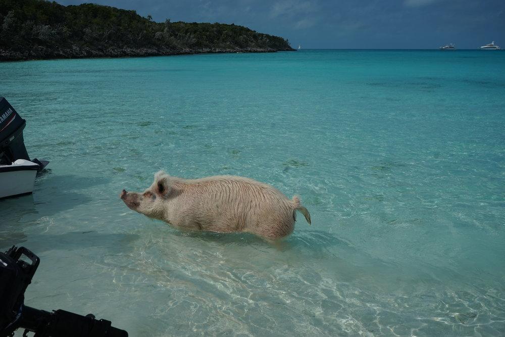 Bahamas 2016 (826).jpg
