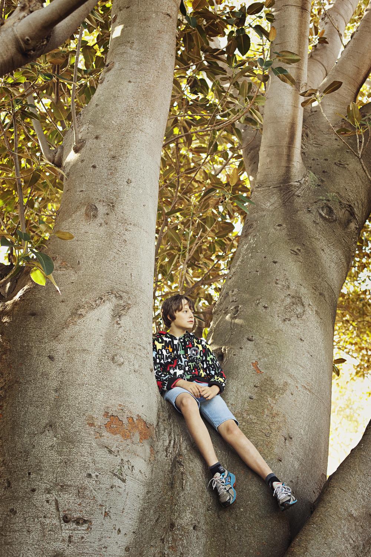 Toby in tree.jpg