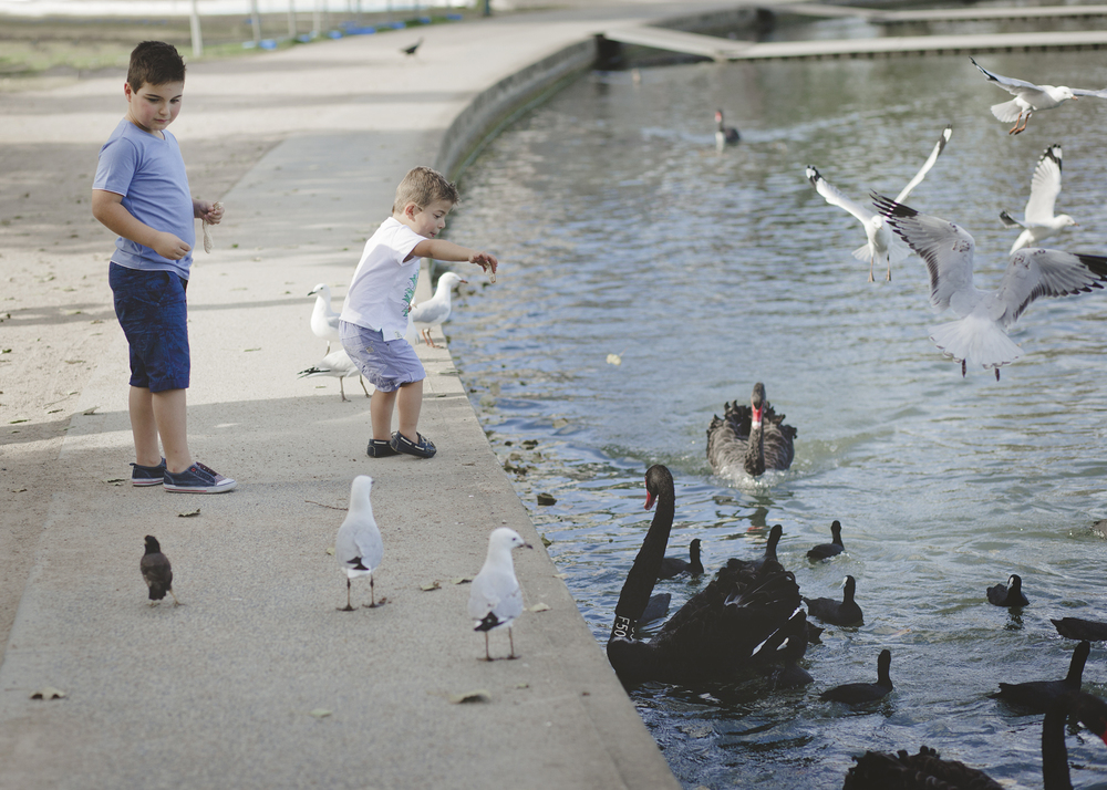 Children feeding the birds!