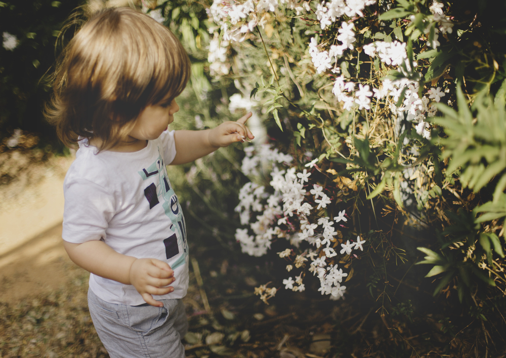 Toddler picking flowers!
