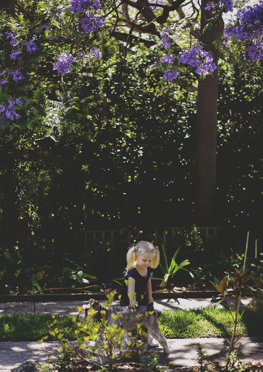 Toddler playing under the Jacaranda tree!
