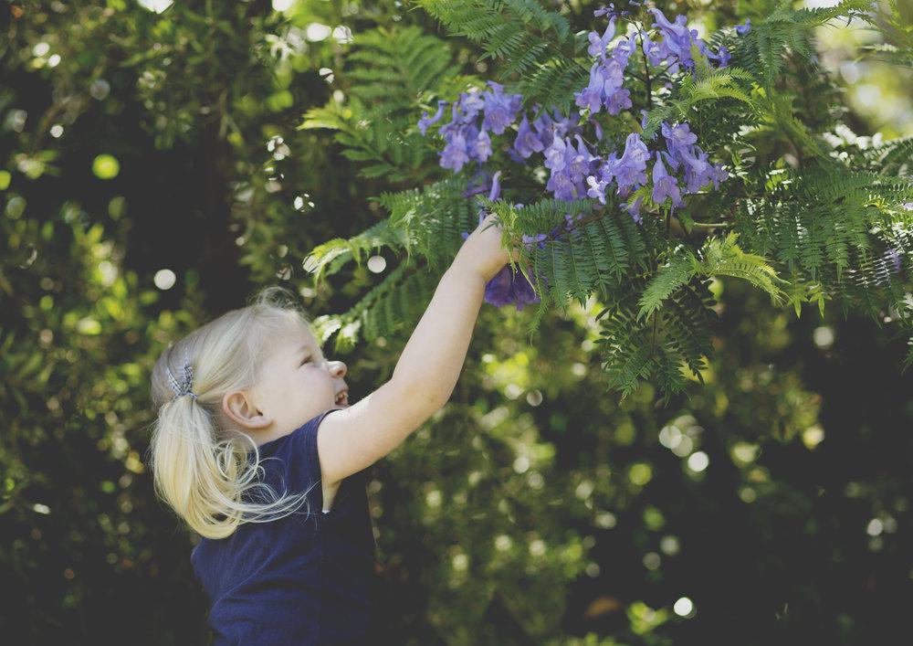 Toddler touching the petals on the Jacaranda tree!