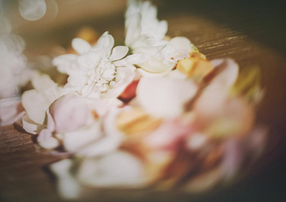 Freelensed image of flower petals!