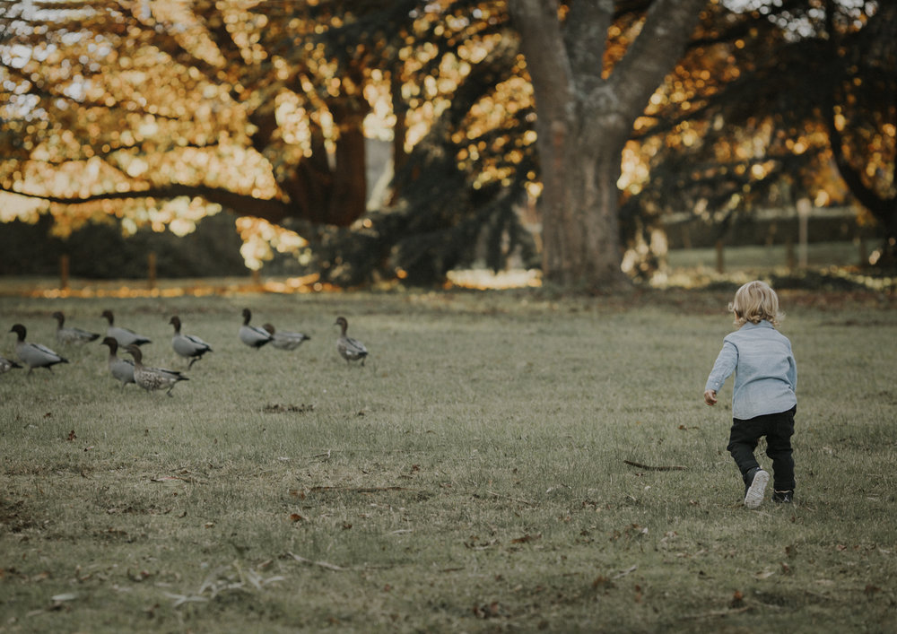 Toddler chasing the ducks