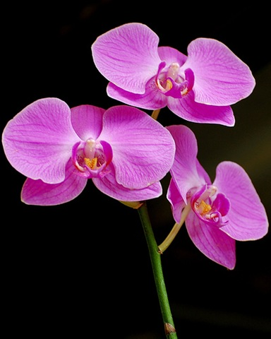 purple_orchids-10349
