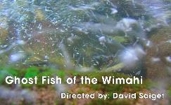 Ghost Fish of the Wimahi poster.jpg