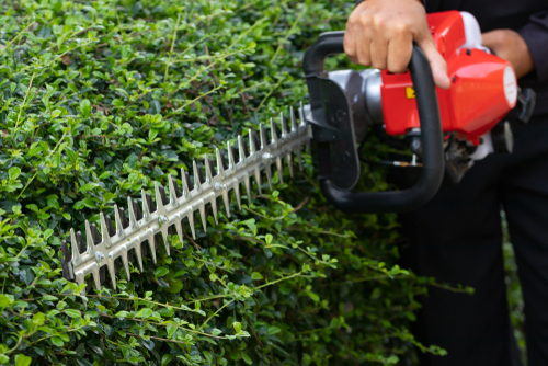 Yard Need TLC? - Clean up, weeding, debris removal, overgrowth, etc.