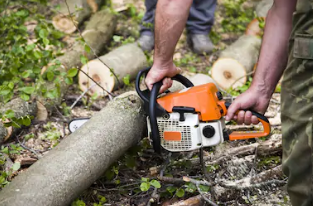 Tree and Debris Cleanup - Have some large branches after a big storm? We'll clean it up.$75 / Hour / Person