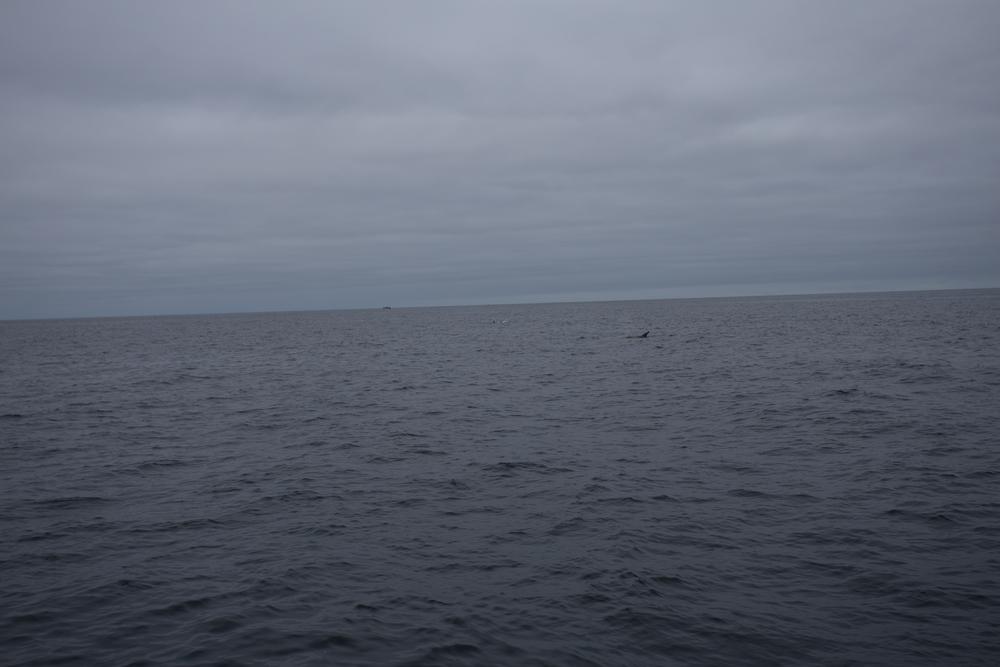 Fishing-21.JPG