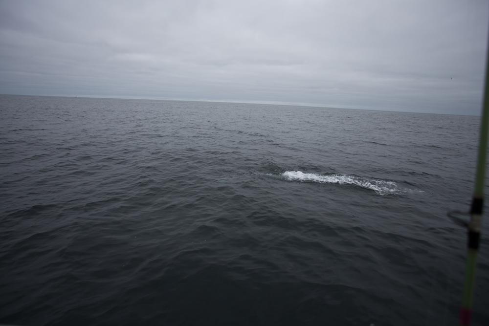 Fishing-24.JPG