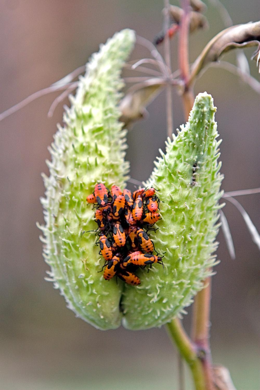 BugsPlant_Web.jpg