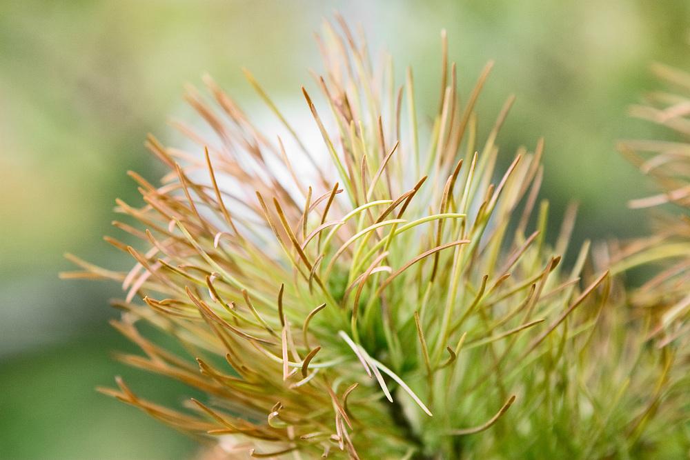 PricklyPlant_Web.jpg