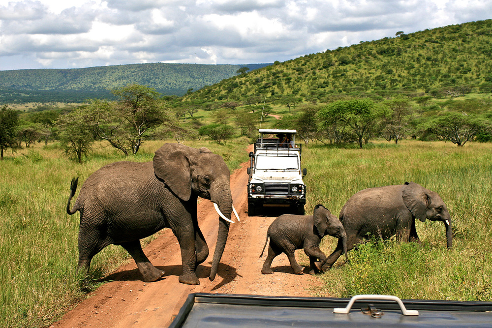 Why did the elephant cross the road?