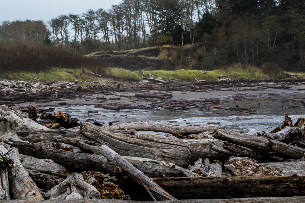 Cape_Disappointment_Driftwood.jpg