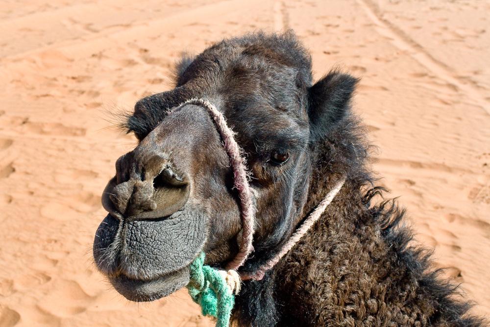 Morocco-134.jpg