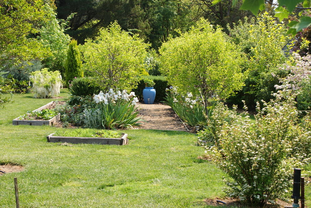 A view of vegetable beds in the main garden