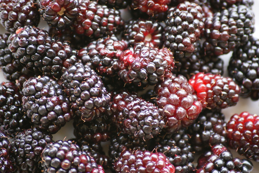 Berries are full of phyto chemical compounds and anti oxidants