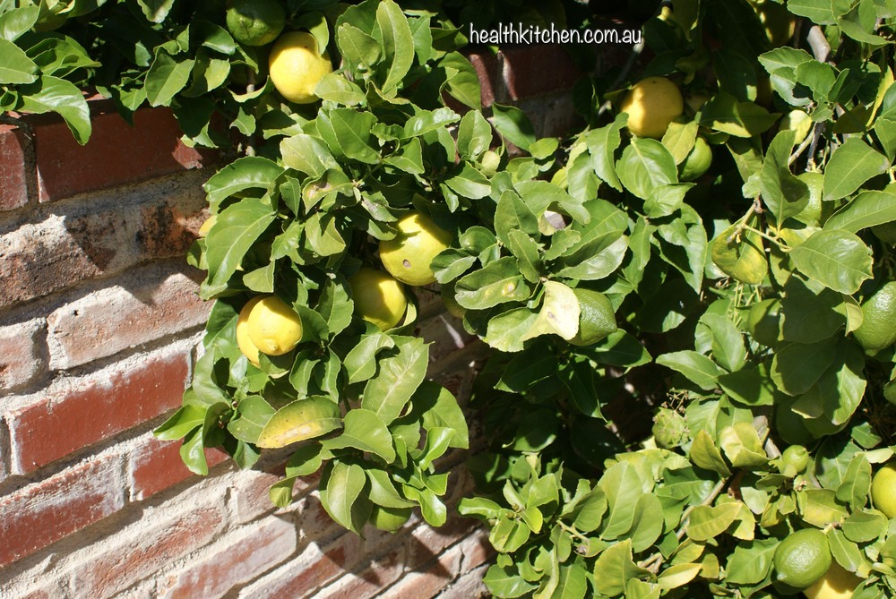 Grow A Few Lemon Trees