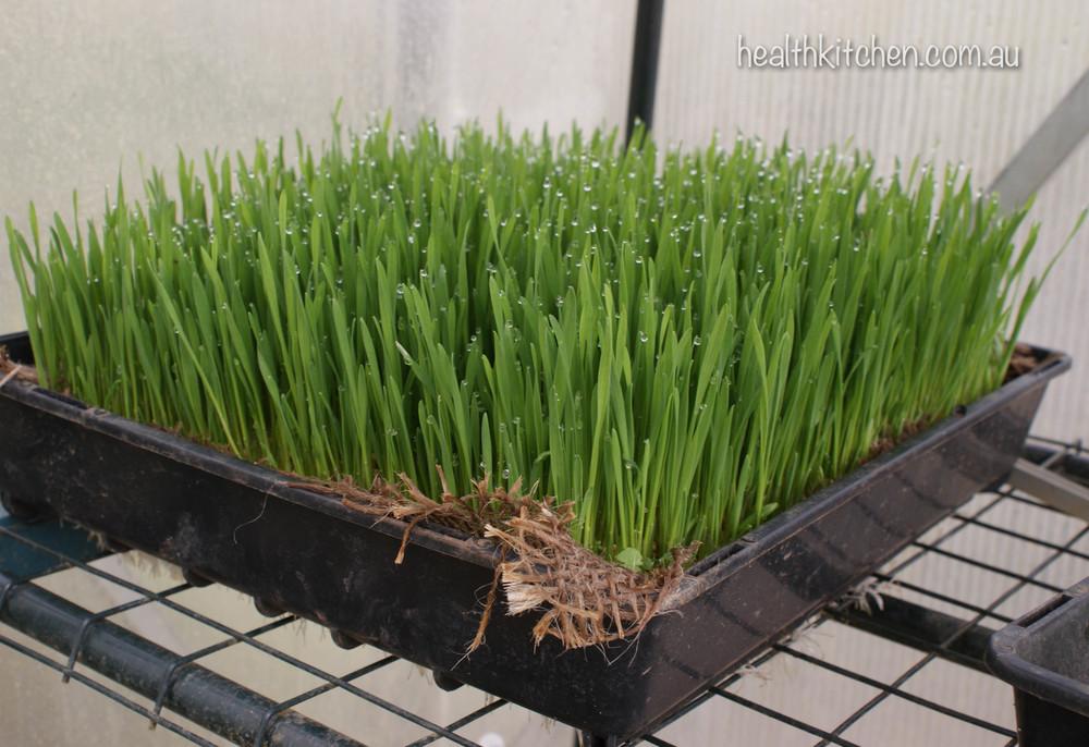 grow organic 15.jpg