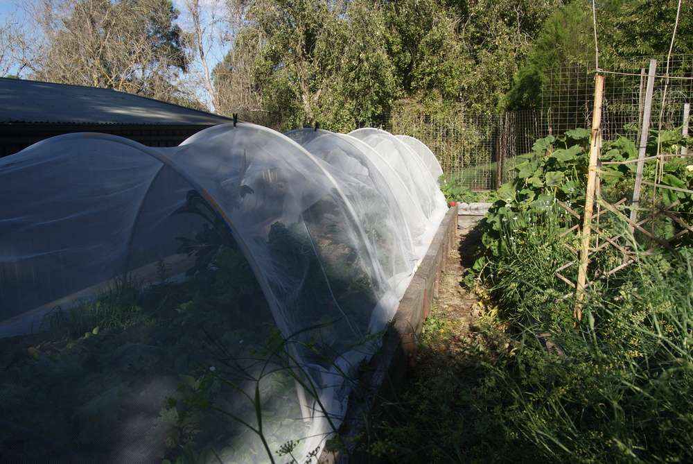 Vege Net Keeps Pests Out & Reduces Water Consumption